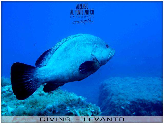 Levanto - Diving - Albergo Al Ponte Antico Carrodano - La Spezia - Liguria