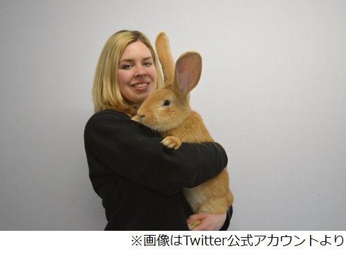 巨大ウサギが飼い主を募集中、犬並みに成長で「飼いきれない」と施設へ。