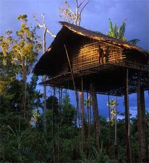Papua tree house
