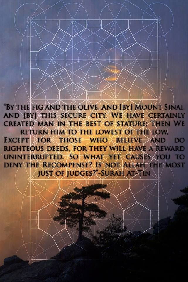 """""""By the fig and the olive, And [by] Mount Sinai, And [by] this secure city, We have certainly created man in the best of stature; Then We return him to the lowest of the low, Except for those who believe and do righteous deeds, for they will have a reward uninterrupted. So what yet causes you to deny the Recompense? Is not Allah the most just of judges?""""-Surah At-Tin"""