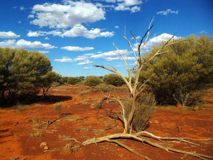 Australian+Desert   Flore désertique RSS