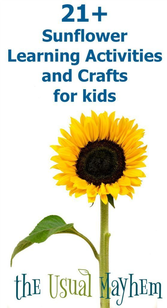 Easy to grow and fun to use for learning, sunflowers are perfect for learning activities and crafts for kids this summer. #ihsnet