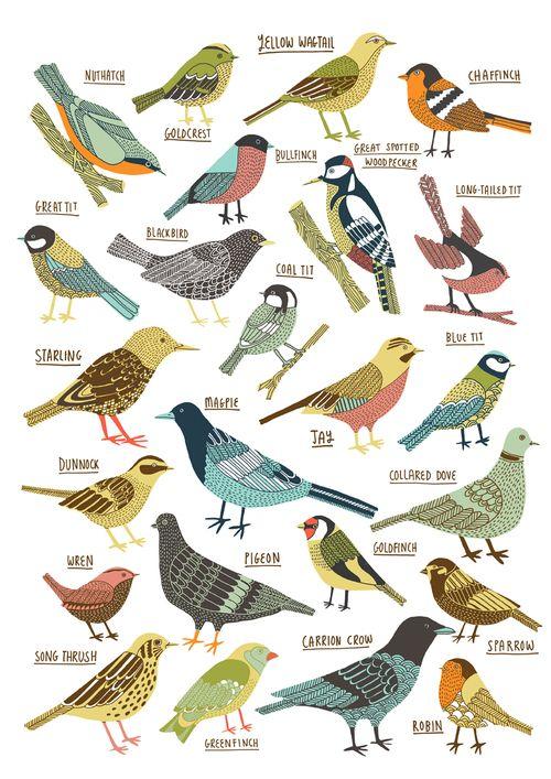 British garden birds illustrated by Kate Sutton.
