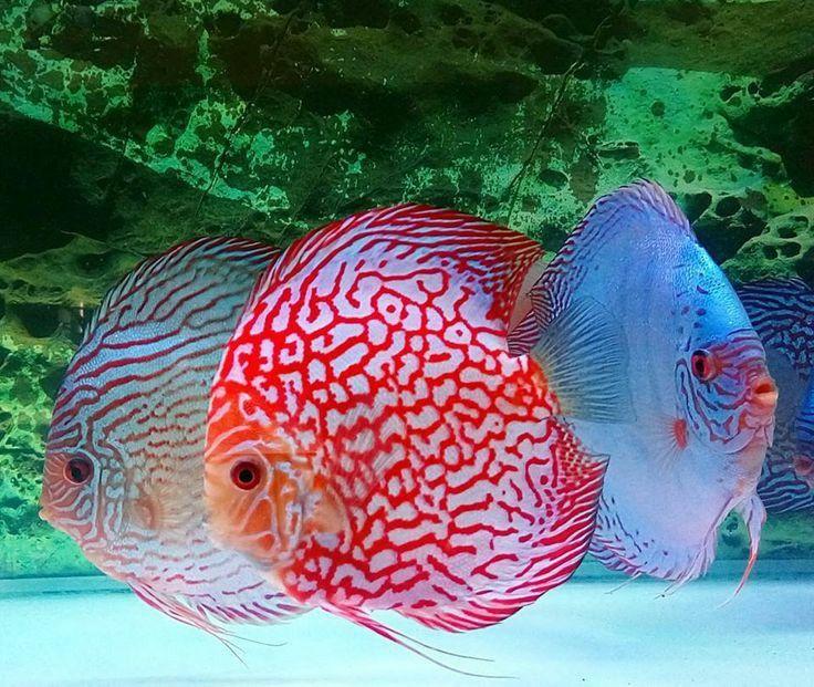 Fresh Water Tank With Large Rocks Fish Tank Terrarium Fish Tank