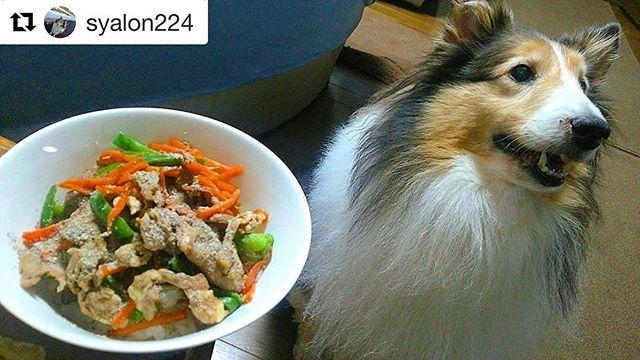 ジンギスカンごはん🐶🍴 @syalon224 さん、ご紹介させて頂きます✨  #ワンレピ のハッシュタグを付けて、ワンちゃんの健康ご飯レシピ(簡単な作り方と材料)や、ワンちゃんとご飯の写真などをぜひ投稿して下さい!「ワンレピ」を通じて健康で幸せなワンちゃんがもっともっと増えますように✨  #dog #犬 #シェルティ#シェットランドシープドッグ #いぬのごはん #ジンギスカン #ラム #ラム肉 #犬ご飯 #犬ごはん #手作り食 #いぬすたぐらむ #イヌスタグラム #愛犬 #犬