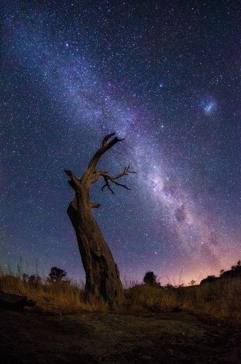 Hermosa noche estrellada con este árbol seco de protagonista... dando vida a la foto