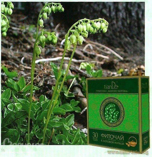 Φυσικό θαυματουργό τσάι, απαραίτητο στην υγεία των γυναικών.