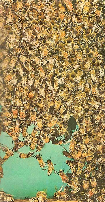Lotsa bees. Look how they form a chain.