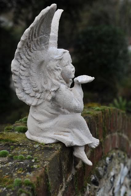 Doce Presença Dos Anjos!