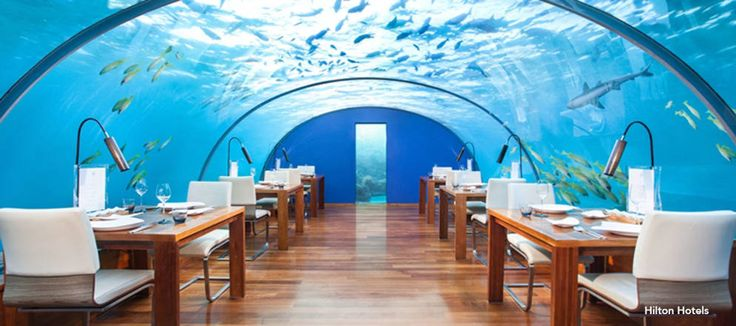 Dine With The Fish At This Underwater Restaurant! - weloveweather.tv