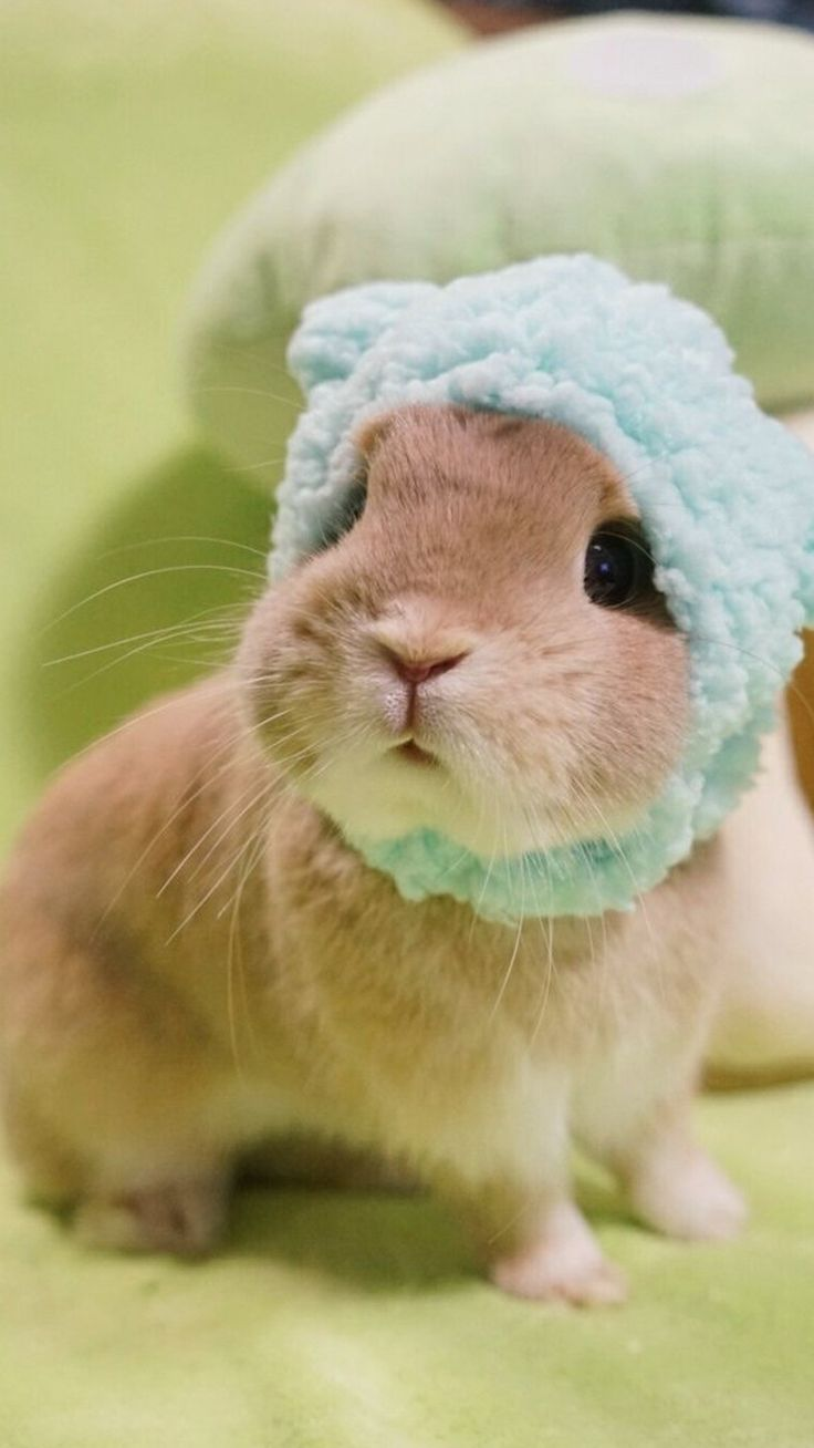 best cute animals images on pinterest cute funny animals