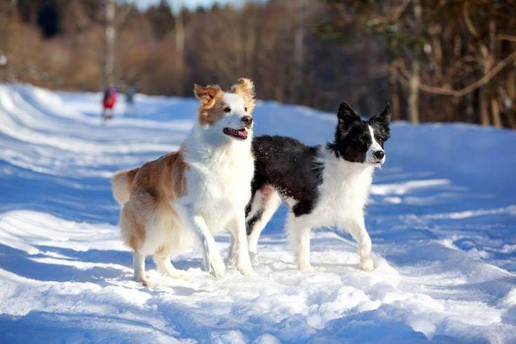 Genießen Sie entspannte Urlaubstage in den Bergen mit Ihrem Vierbeiner im Tiroler Zillertal. Das Hotel Magdalena verfügt über einen großzügigen Wellnessbereich, einen Hundespielplatz, barrierefreien Suiten und romantischen Winterwanderwegen. Der Hund übernachtet gratis! 4 Nächte ab € 424,00 pro Person/Doppelzimmer - Hunde gratis!