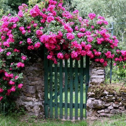 Créer un jardin romantique – Aménagement de jardin