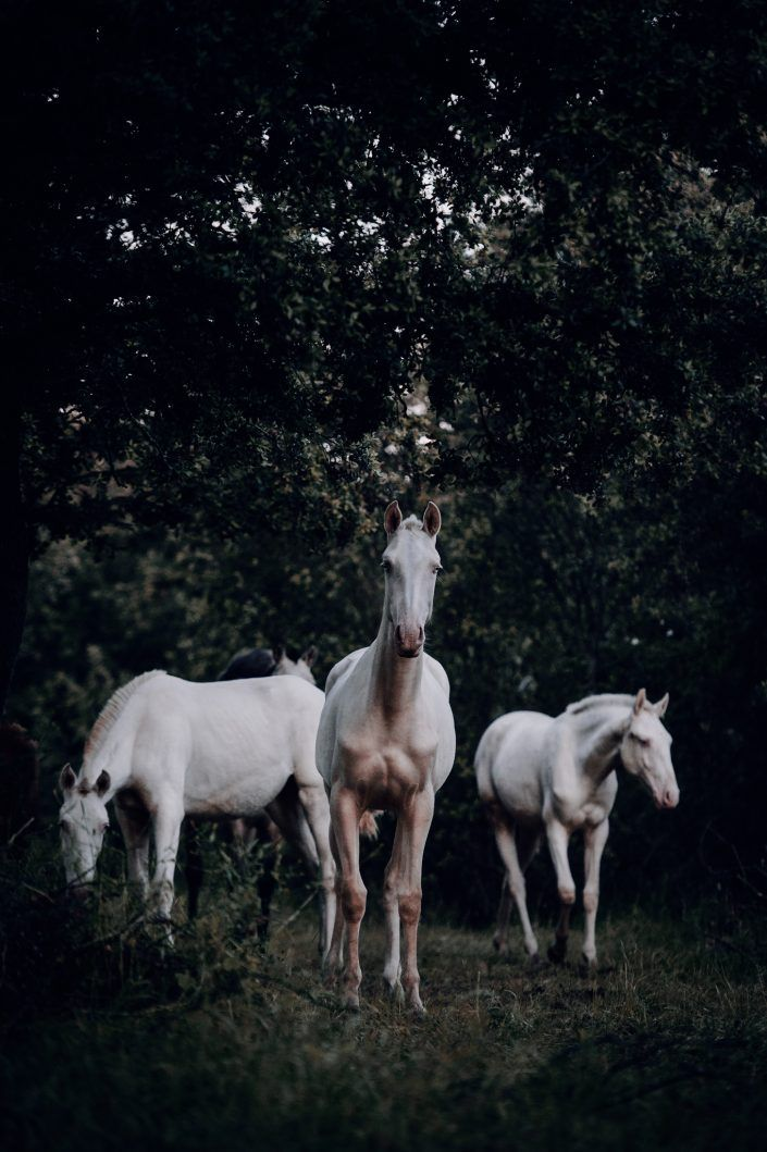 Fotos Pferde In Der Natur I Anna Ibelshauser Pferde Fotografie Lustige Pferdebilder Hubsche Pferde