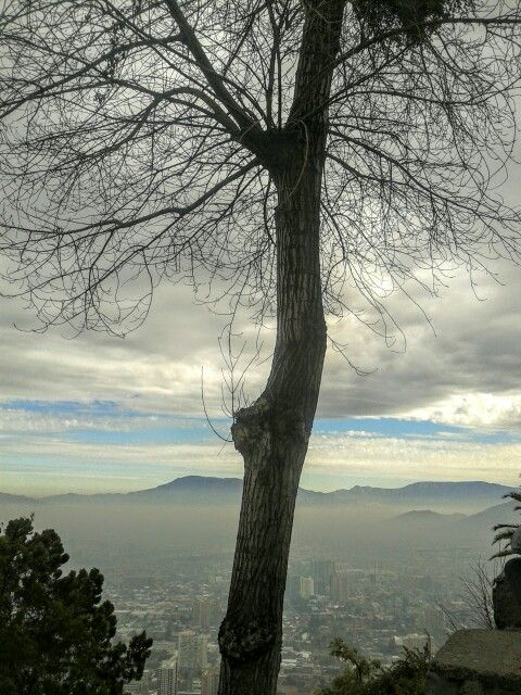 Tree near the top of Cerro San Cristóbal in Santiago de Chile