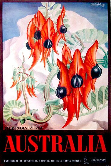 Eileen Mayo (British/Aust/NZ, 1906-1994) Australia. Sturt's Desert Pea, c1953. Colour and process lithograph, signed in image upper right, 98.4 x 62cm.