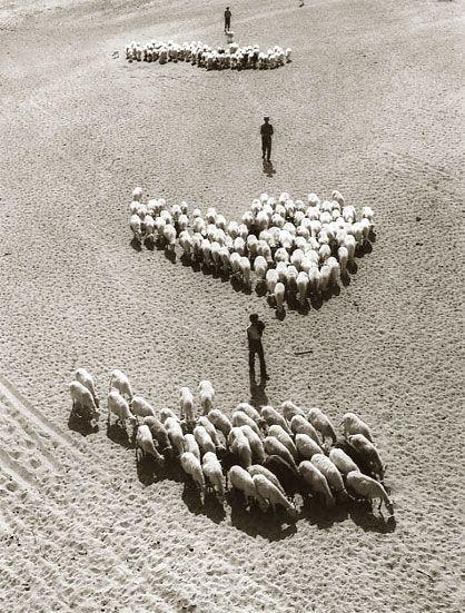Fulvio Roiter, Andalusia, 1955