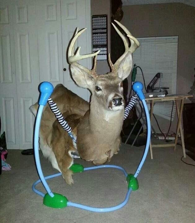 You might be a redneck if: Your kids toys come from a taxidermist!