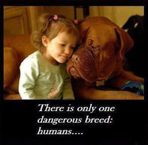 There is only one dangerous breed: humans........Truths Hurts, Danger Breeds, Quote, Pitbull, So True, Pit Bull, Dogs Photos, True Stories, Animal