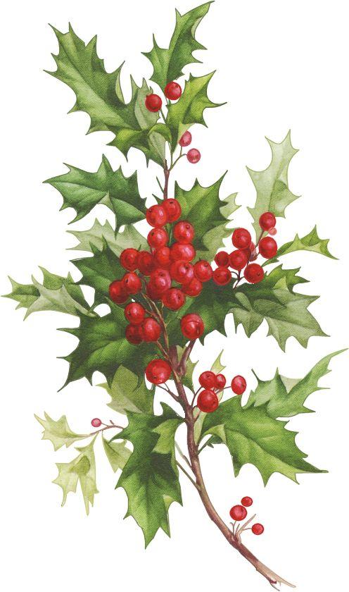 CHRISTMAS HOLLY CLIP ART