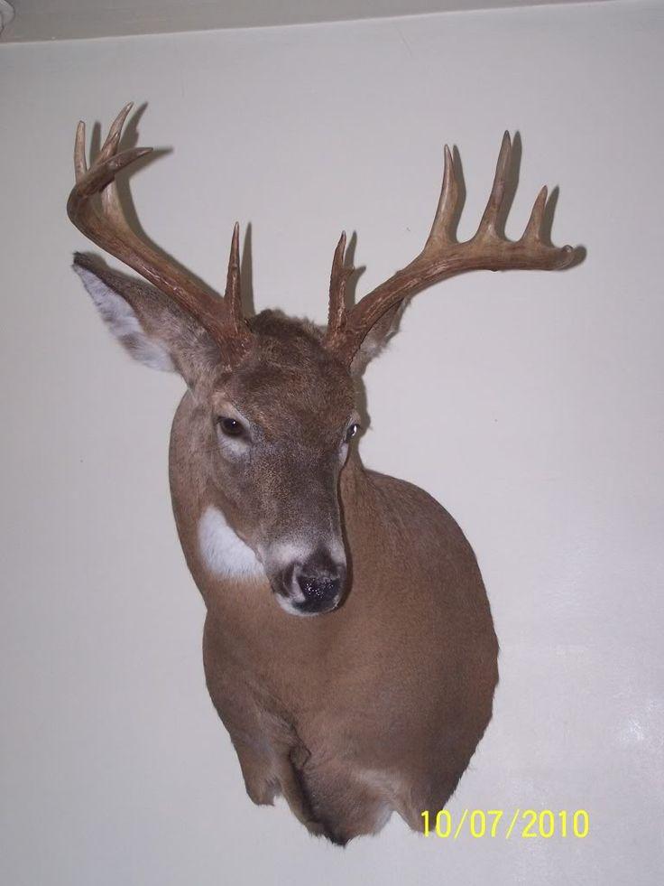 13 best Deer mount ideas images on Pinterest | Deer mounts ...