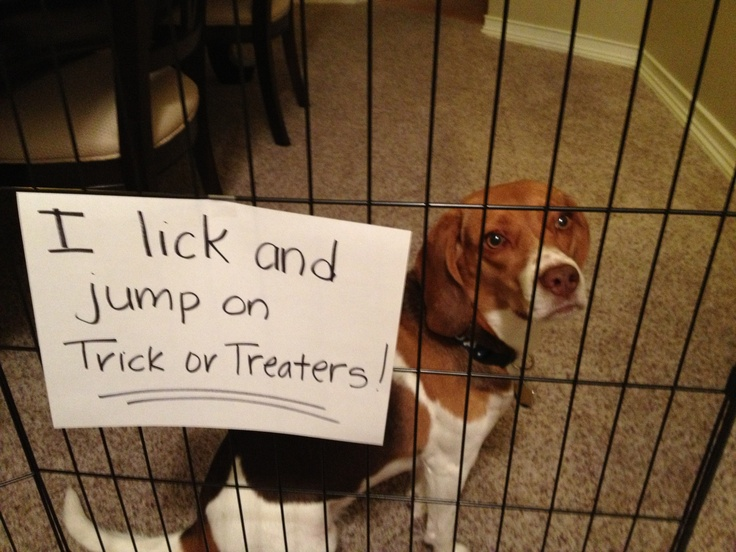My own personal dog shaming!