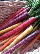 """Carottes arc-en-ciel Un mélange de 10 variétés de carottes : """"Cosmic Purple"""", """"Purple Dragon"""", """"Blanche de Kuttingen"""",""""Jaune du Doubs"""", """"Colmar"""", """"Nantaise"""", """"Little Fingers"""", """"Atomic Red"""", """"Demi-longue de Danvers"""", """"Gniff"""".  Kokopelli"""