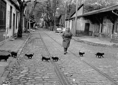 Robert Doisneau, Les chats de Bercy, Paris,1974
