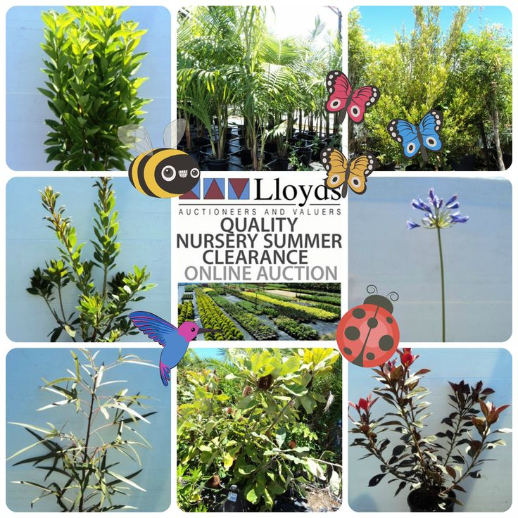Time to top up the garden beds with the weekly Nursery Auction, to bid click here: