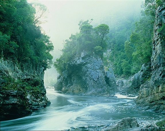 Morning Mist and Trees at Rock Island Bend, Franklin River, Southwest Tasmania, Australia - Photo by Peter Dombrovskis