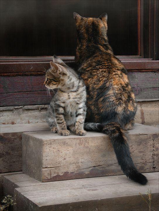Controlando todos los flancos o la mamá nos da la espalda para mostrar su desacuerdos.