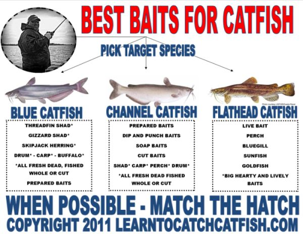 fishing rigs for catfish | Best Catfish Bait, Catfish Bait Selection 101