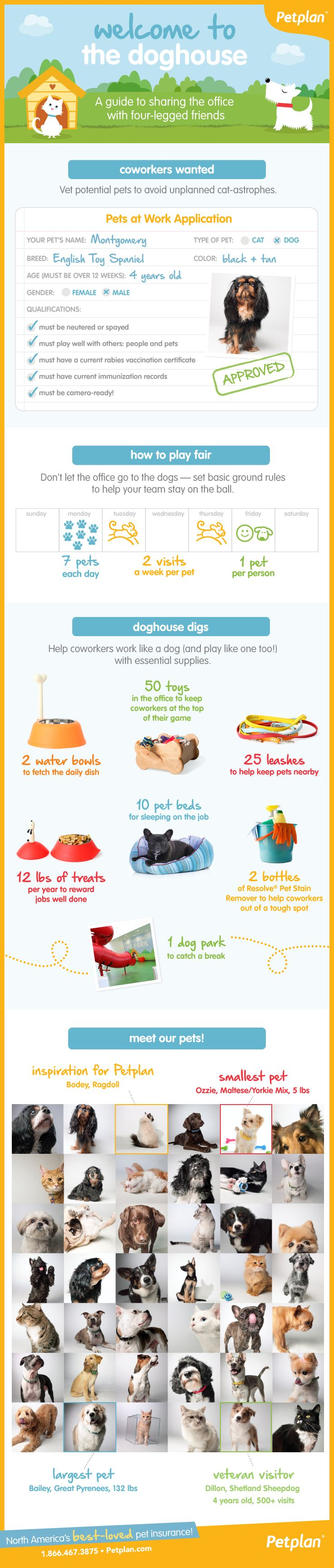 "Not Safe for Work: Petplan Reveals Top Take Your Pet to Work Day ""Faux Paws"" [Infographic]"