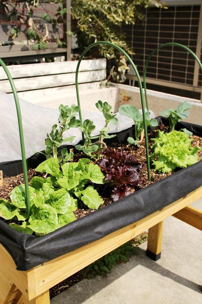 木箱な畑 ベジトラグ で野菜づくり中 支柱 虫除け編 家庭菜園