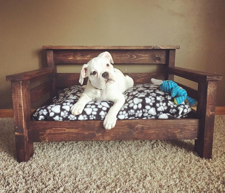 Kona the #bulldogge and her finished bed. Here's hoping she doesn't chew the wood up! She was a wood scrap stealer the entire time I was building. Thank you #kregjig for making this an easy build. #DIY #madebyme #madebymom #lifeofapuppy #lifeofkona #woodwork #woodworking #dogbed #sawdustandpuppyprints #11weeksold #bulldogsofinstagram #bullypics #oldeenglishbulldogge #boymom #boysandtheirdogs de obsessive.crafting.disorder