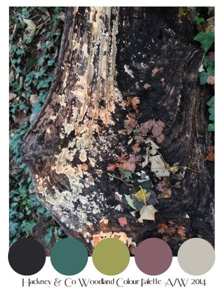 Hackney & Co Hand Illustrated Pattern -Colour Palette for Woodland Interiors Project