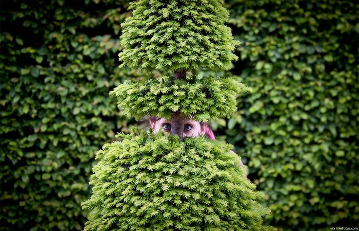 """Momento para """"brincar às escondidas"""" nos jardins de Versalhes. Os campos de Versalhes ( do Palácio de Versalhes ) contêm um dos maiores jardins formais alguma vez criados, com extensos parterres, fontes e canais, desenhados por André Le Nôtre. Para uma visita virtual a estes jardins use este mapa google e depois arraste o """"bonequinho …"""