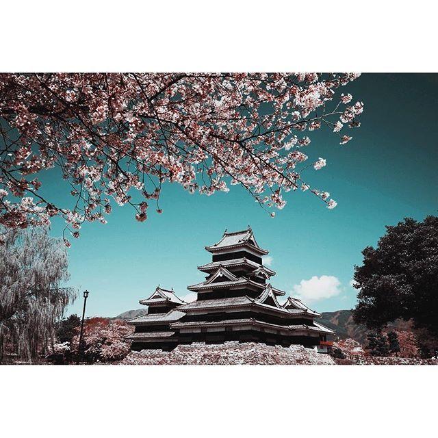 【yakuzaroger】さんのInstagramをピンしています。 《I have travelled far to meet you. #日本 #松本 #松本城 #桜 #青い空 #japan #matsumoto #matsumotocastle #nostalgia》