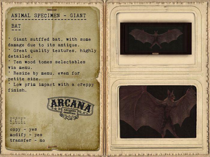 {A} Animal Specimen - Giant Bat