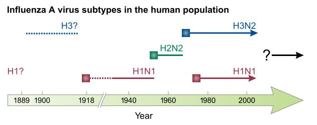 #Influenza A virus subtypes in humans over time