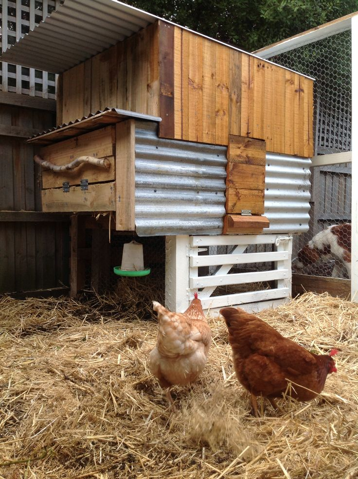 Happy chickens.