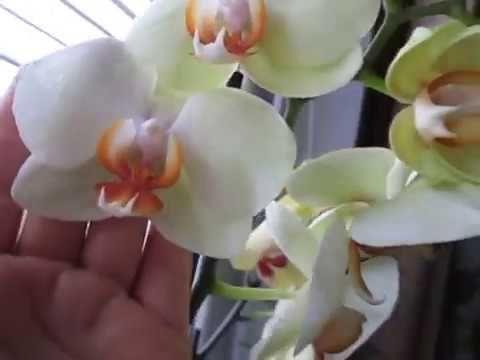 Закрытая и полузакрытая система  для орхидей. Обзор моих любимиц. - YouTube