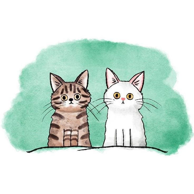 I looove cats, personally I have two cuties. They're so special, especially the white one, because she is deaf <3