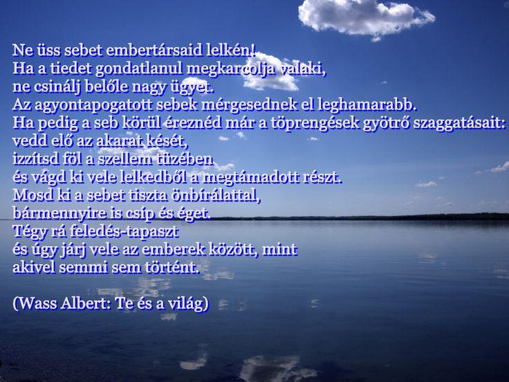 Wass Albert Te és a világ