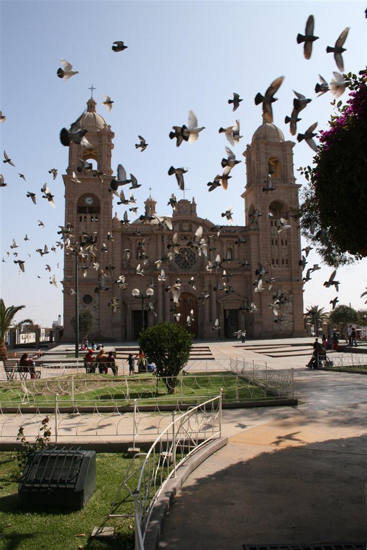 El vuelo de las Mensajeras - Afueras de la Catedral de Tacna, Perú.