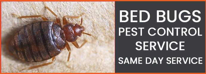 How To Stop Bed Bug Infestation In Your House With Images Pest