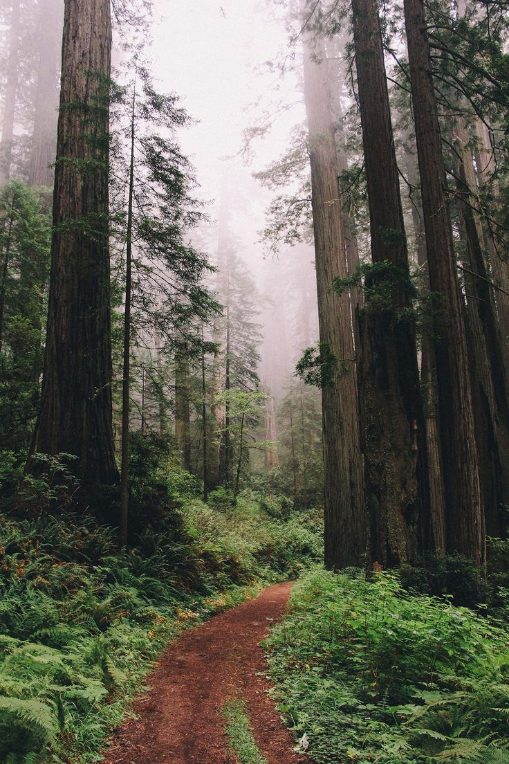 West Coast Road Trip - Redwoods