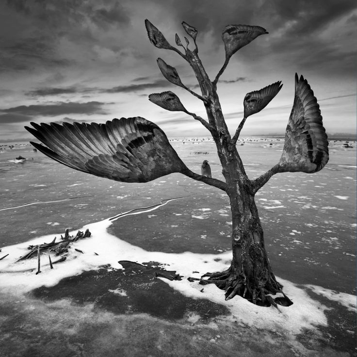 Wingtree by Dariusz Klimczak on 500px