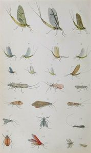 Plate 7: Natural Trout Flies | Sanders of Oxford