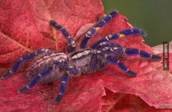 看完這18種確實存在地球的生物,才發現有一半以上都不認識…更糟的是竟然瀕臨絕種! - boMb01